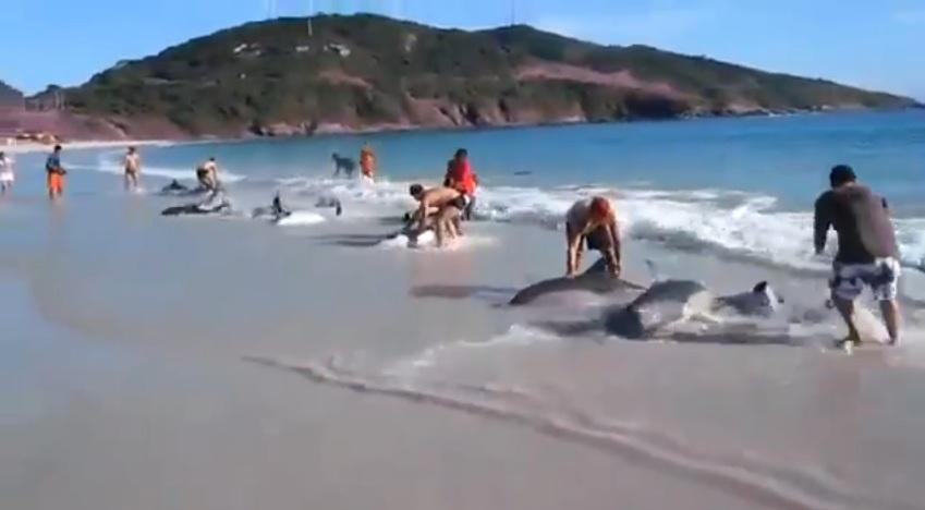 30_dauphins_echoues_sur_une_plage
