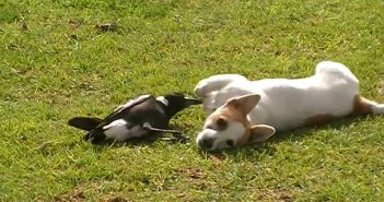 amitié_chien_oiseau
