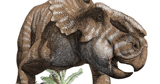 pachyrhinosaure