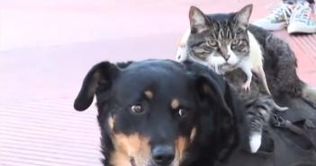 un_chien_un_chat_et_un_rat_meilleurs_amis_du_monde