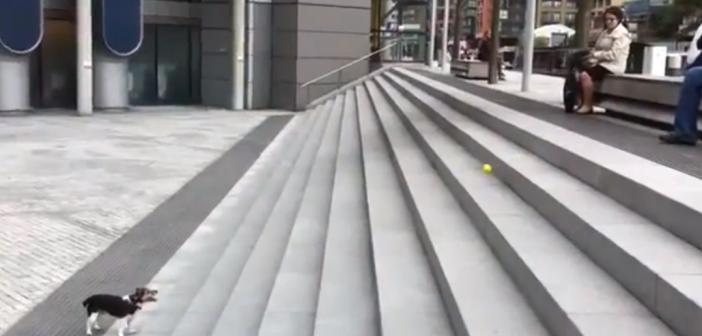 chien s'amuse avec une balle de tennis
