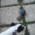 tortue chien foot