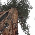 arbre Le Président