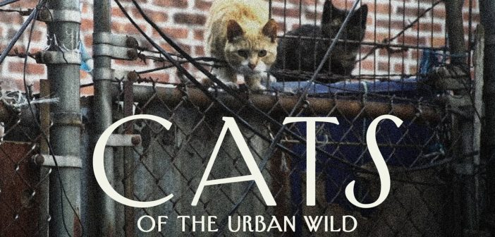 Cats of the Urban Wild
