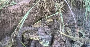 GoPro au milieu de serpents
