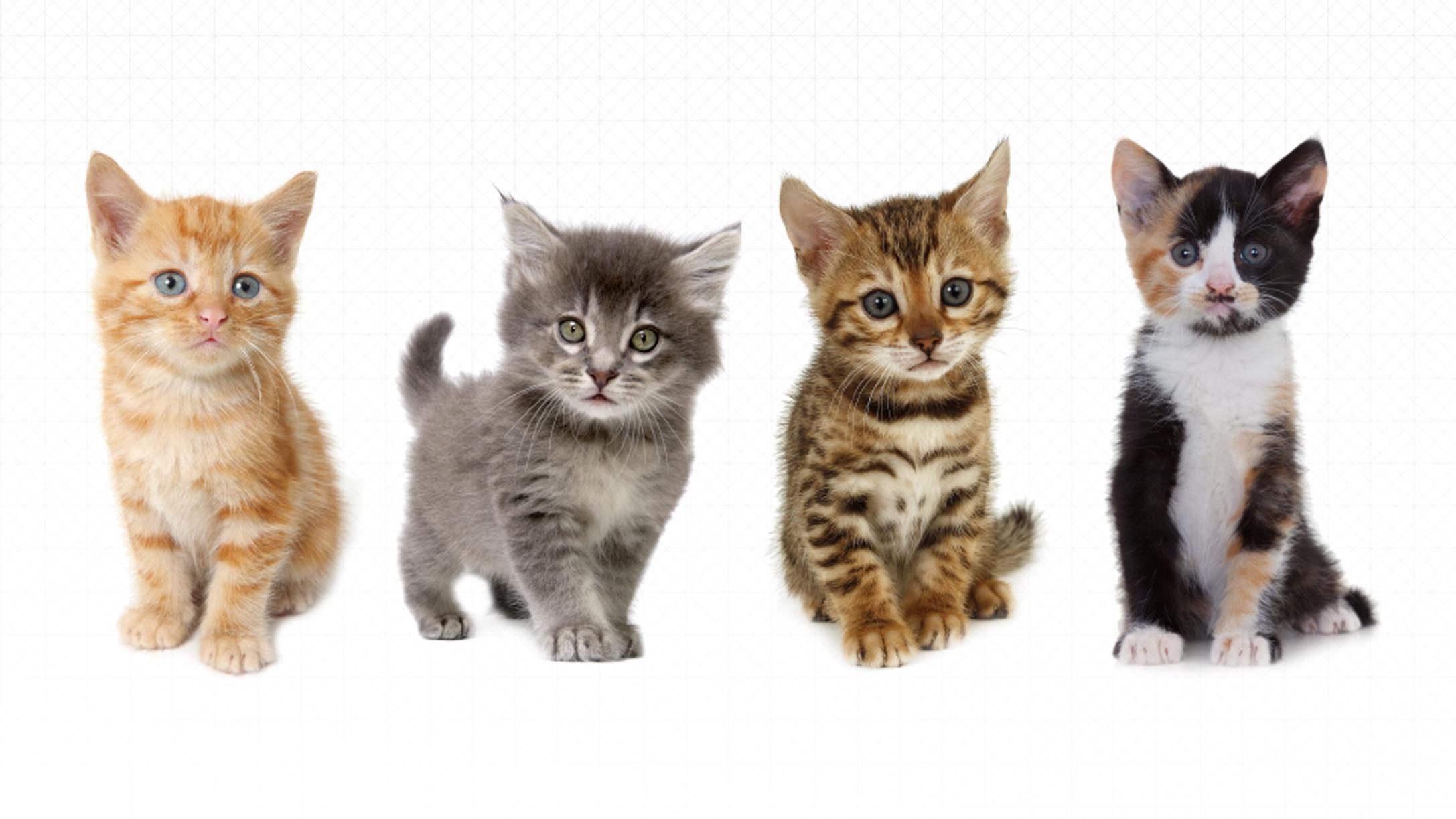 une application pour trouver les chats adopter proche de chez vous diazmag. Black Bedroom Furniture Sets. Home Design Ideas