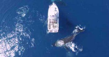 des-baleines-dansent-autour-dun-bateau